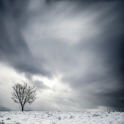 Solitude「Lone tree in winter landscape」:スマホ壁紙(14)