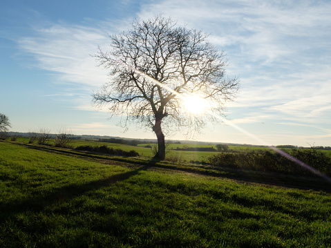 Nouvelle-Aquitaine「Lone tree in field, Niort, Deux-Sevres, France」:スマホ壁紙(13)