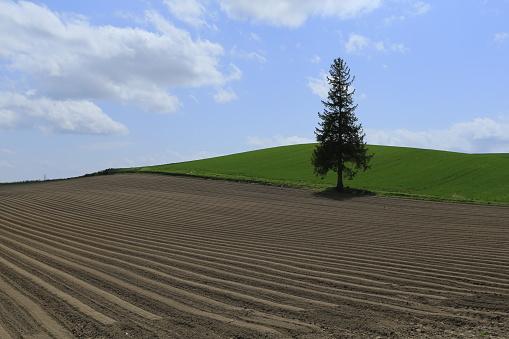 寂しさ「Lone tree in a field, Hokkaido, Japan」:スマホ壁紙(5)