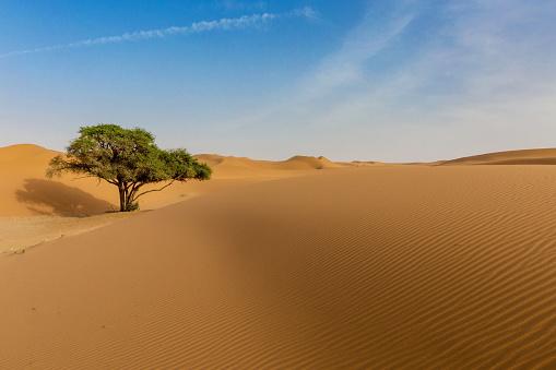 Single Tree「Lone tree in the desert, Saudi Arabia」:スマホ壁紙(7)