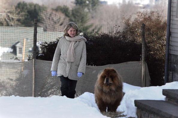 Diva - Human Role「Martha Stewart Starts Home Confinement」:写真・画像(8)[壁紙.com]