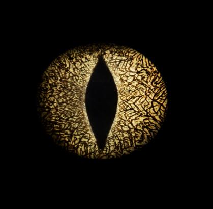 Iris - Eye「Caiman crocodile's eye, close-up」:スマホ壁紙(5)