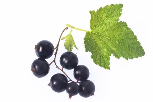 葉脈「Blackcurrants with leaf, close-up」:スマホ壁紙(13)