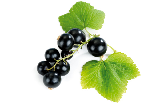 カシス「Blackcurrants with leaf, close-up」:スマホ壁紙(0)