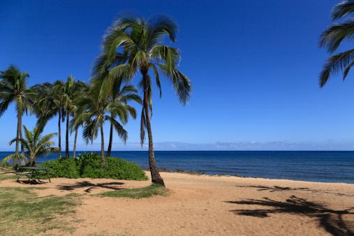 オアフ島「Beach Resort, Haleiwa, Hawaii, U.S.A.」:スマホ壁紙(13)