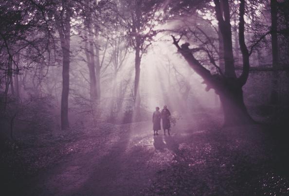 Woodland「Burnham Beeches」:写真・画像(10)[壁紙.com]