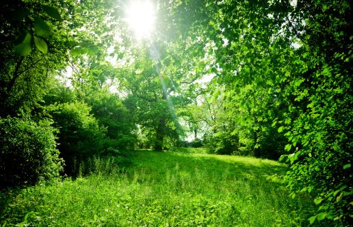 緑色「夏の日」:スマホ壁紙(12)