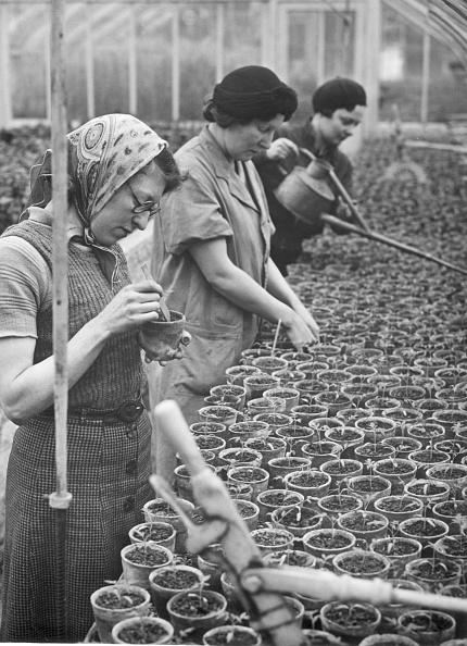 Fred Morley「War Gardeners」:写真・画像(8)[壁紙.com]