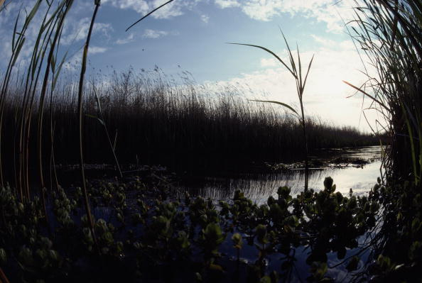 Grass「Former Port」:写真・画像(2)[壁紙.com]
