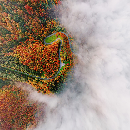 Steep「Wide angle overhead aerial view of autumn forest road in morning fog. Moselle Valley, Germany.」:スマホ壁紙(11)