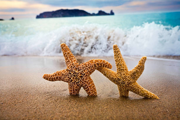 In the Mood for Love -  Couple of Starfish:スマホ壁紙(壁紙.com)