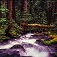 ウィラメット国有林壁紙の画像(壁紙.com)