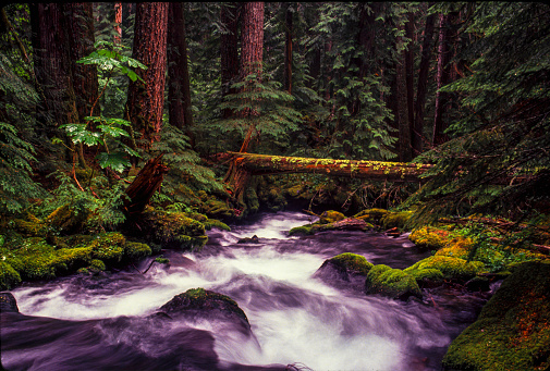 ウィラメット国有林「Rushing water in Pamilia Creek, Willamette National Forest」:スマホ壁紙(5)