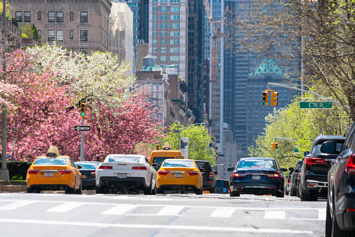 Park Avenue「Cars go through beside the rows of Cherry blossoms trees at Park Avenue Uptown Manhattan New York USA on Apr. 29 2018.」:スマホ壁紙(14)