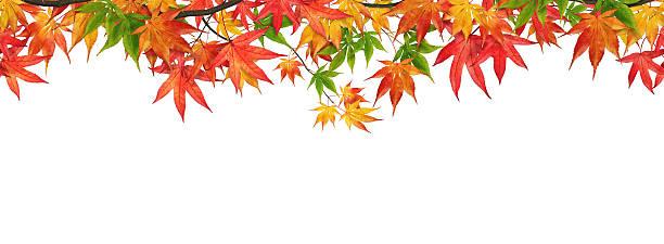 Seamless Autumn Foliage:スマホ壁紙(壁紙.com)