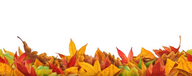 かえでの葉「シームレスな秋の葉」:スマホ壁紙(3)