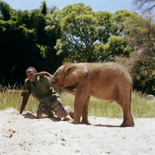Affectionate「Baby Elephant」:写真・画像(8)[壁紙.com]