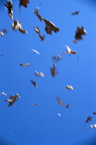 Gale「Leaves Blowing in the Wind」:スマホ壁紙(9)