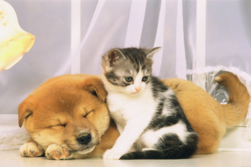 子猫「Puppy and Cat」:スマホ壁紙(6)
