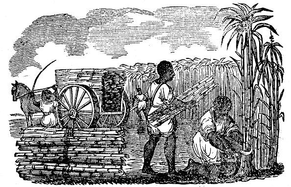 Sugar Cane「Slaves harvesting sugar cane in Louisiana, 1833.」:写真・画像(5)[壁紙.com]