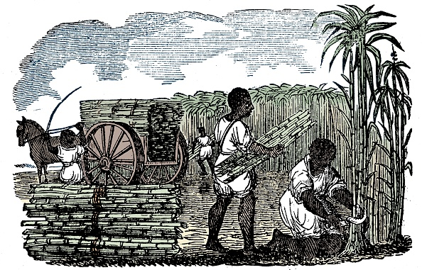USA「Slaves Harvesting Sugar Cane In Louisiana」:写真・画像(9)[壁紙.com]