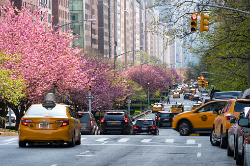flower「Manhattan traffic goes through along the full-blossomed rows of cherry blossom trees at Park Avenue in Manhattan New York City.」:スマホ壁紙(13)