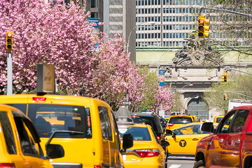 flower「Manhattan traffic goes through along the full-blossomed rows of cherry blossom trees at Park Avenue in Manhattan New York City. Grand Central Terminal can be seen in far back distance.」:スマホ壁紙(7)