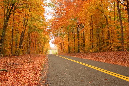 Driving「Straight drive through a dense autumn forest」:スマホ壁紙(16)