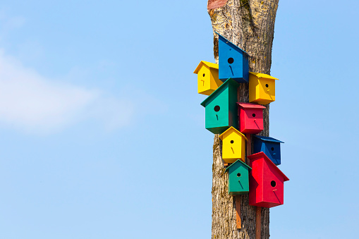 鳥の巣「Colorful birdhouses on tree」:スマホ壁紙(17)