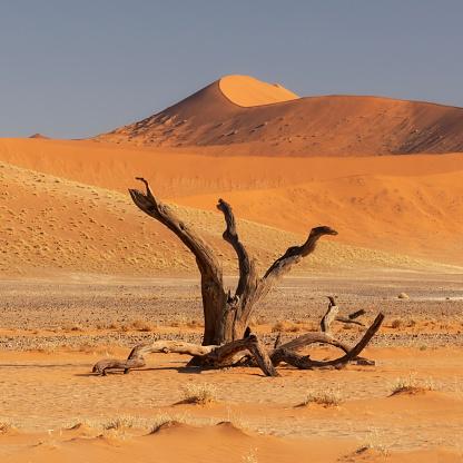 Namib-Naukluft National Park「The Namib Desert Sand Dunes, Sossusvlei, Namibia, Africa」:スマホ壁紙(7)