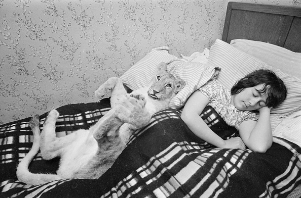 Resting「Shirley And Sheba」:写真・画像(16)[壁紙.com]