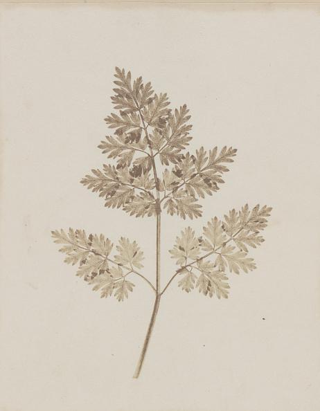 Specimen Holder「Leaf Of A Plant」:写真・画像(3)[壁紙.com]