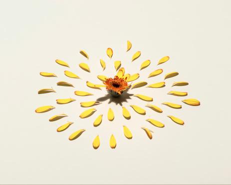 Perfection「picked flower」:スマホ壁紙(16)