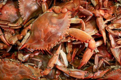 Chesapeake Bay「Cooked Blue Crab seafood background」:スマホ壁紙(18)
