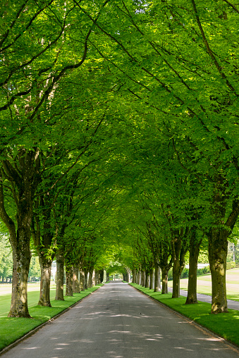 Avenue「Meuse-Argonne American Cemetery in France」:スマホ壁紙(10)