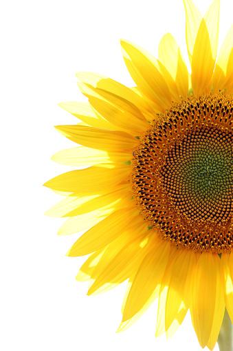 Farm「Sunflowers」:スマホ壁紙(14)