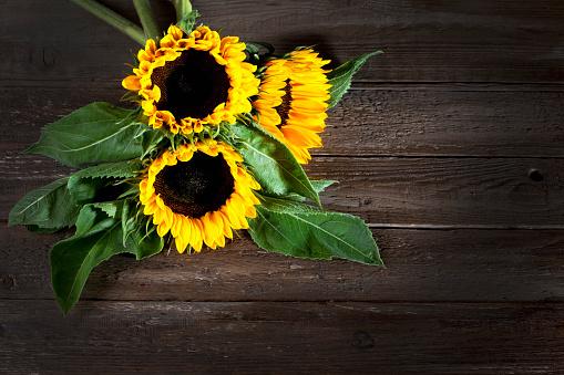 ひまわり「Sunflowers, Helianthus annuus, on wood」:スマホ壁紙(0)