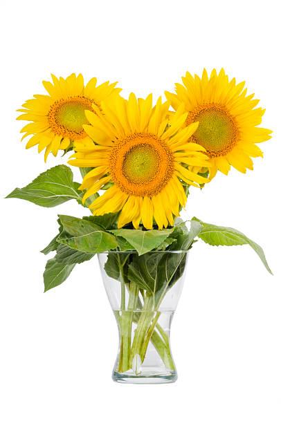 Sunflowers のガラスの花瓶に白背景:スマホ壁紙(壁紙.com)