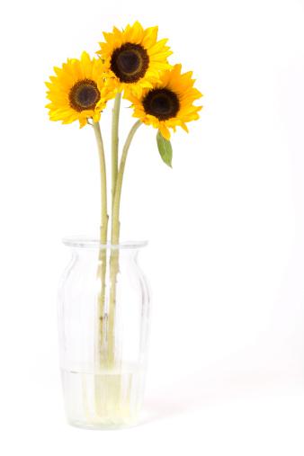 ひまわり「Sunflowers の花瓶」:スマホ壁紙(10)