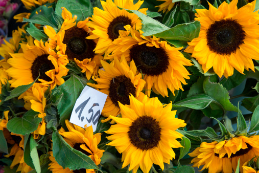 Flower Shop「Sunflowers for sale at flower shop」:スマホ壁紙(15)