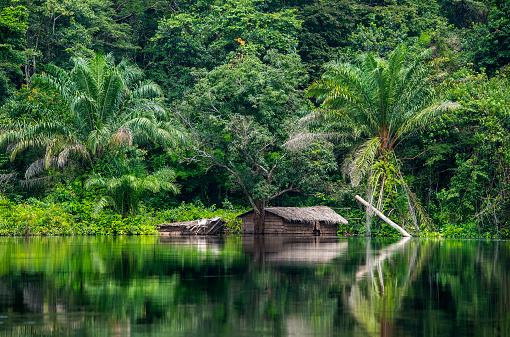 Rainforest「Hut at the shoreline of Congo River」:スマホ壁紙(6)