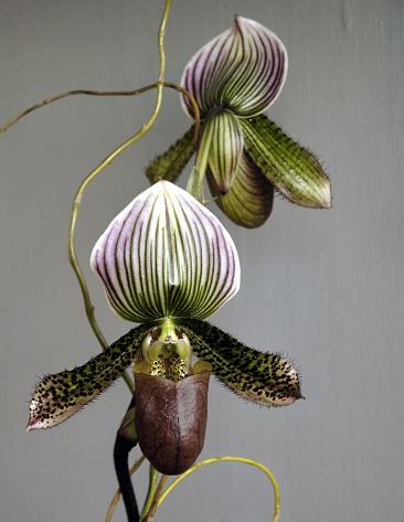 Planting「Beautiful Orchids」:スマホ壁紙(9)