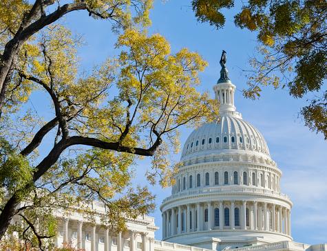 Legislation「United States Capitol Dome Bordered by Trees in Autumn」:スマホ壁紙(11)
