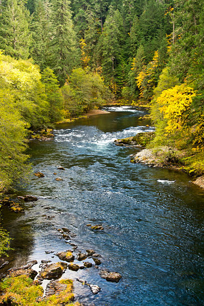 Umpqua River in autumn, Umpqua National Forest, Oregon, USA:スマホ壁紙(壁紙.com)