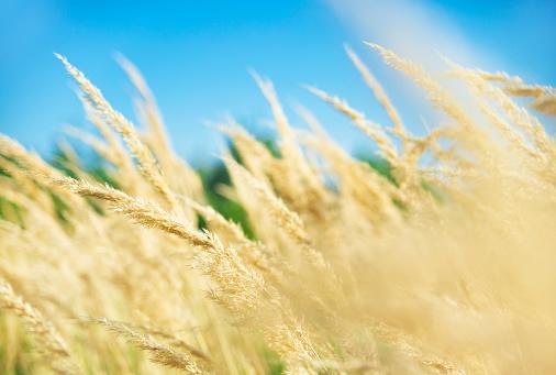 Allergy「Grassland」:スマホ壁紙(4)