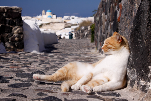 Mixed-Breed Cat「Stray cat in Oia on Santorini, Greece」:スマホ壁紙(13)