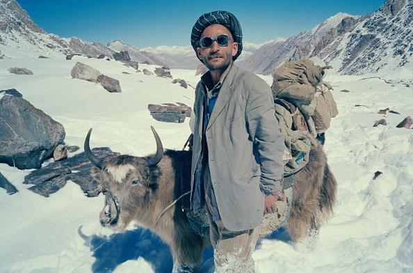 Wild Cattle「Afghan Yak Driver」:写真・画像(2)[壁紙.com]