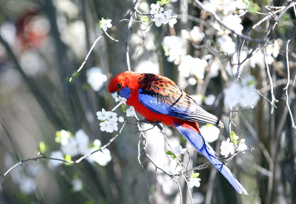 春「First Day Of Spring Arrives In Australia」:写真・画像(6)[壁紙.com]