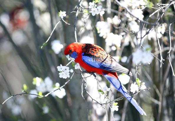 春「First Day Of Spring Arrives In Australia」:写真・画像(17)[壁紙.com]