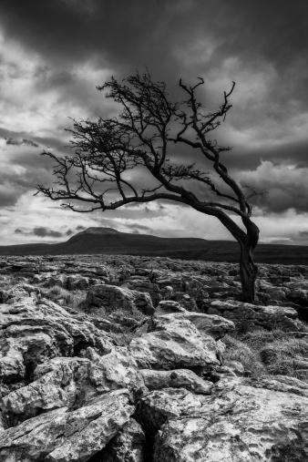 Hawthorn「England, North Yorkshire, Twisleton Scar.」:スマホ壁紙(9)